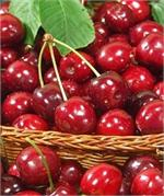 Cherry Jubilee Fresh Roasted Flavored Coffee